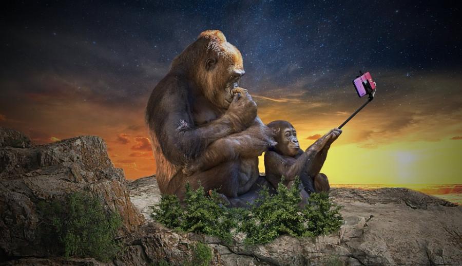 Opice Selfie