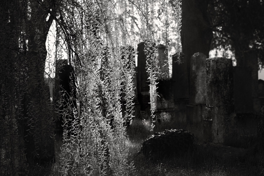 Ráno (Židovský hřbitov na Úsově)