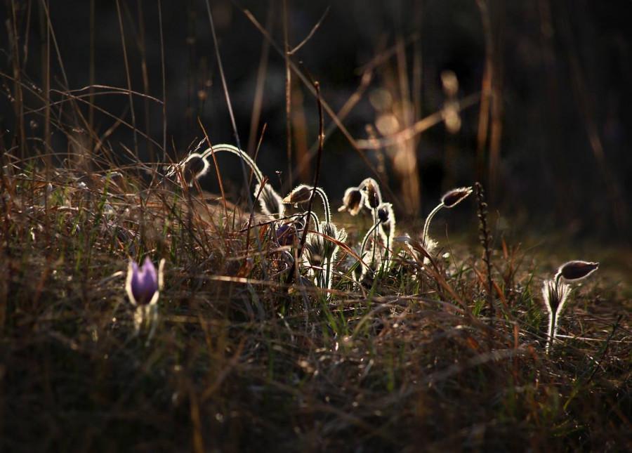 Velikonoční květ a světlo