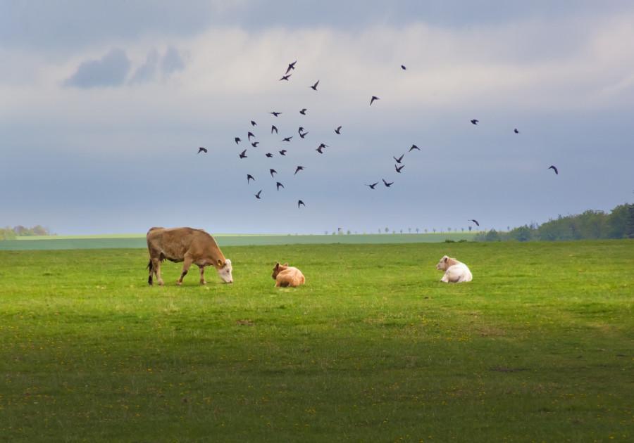 ''Ptactvo nebeské'' na bukolickém obrázku z Oderských vrchů (květen 2020)