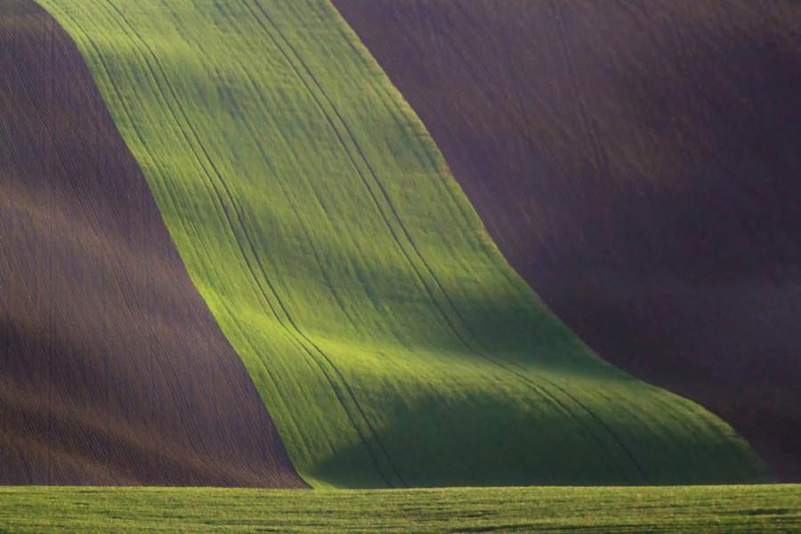 Zelená rouška na tváři země