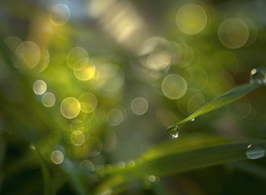 Zahrada po dešti - Hry světla