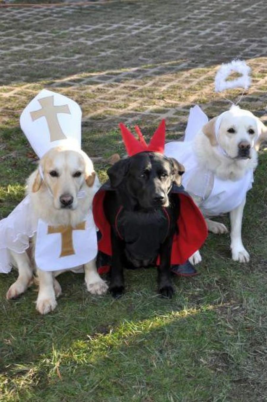 I my pejsci máme svého psího Mikuláše, čerta a andílka, haf!