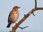 Ptactvo nebeské karanténu nemá a řve si venku jak zjednané - Den devatenáctý