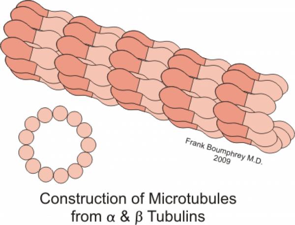 Mikrotubuly, jejichž údajné kvantové vlastnosti mají být podstatou vědomí.
