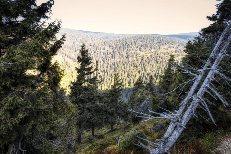 Že vybělené kosti stromů nám dávají poznat samy sebe.