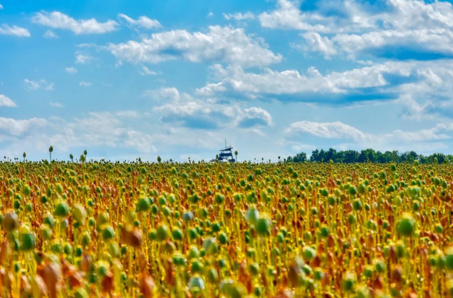 Zvlněná krajina polí, která se začíná zvedat k nebi.