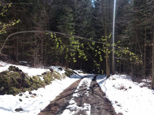 Kontrast zimy a jara na cestě do lázní