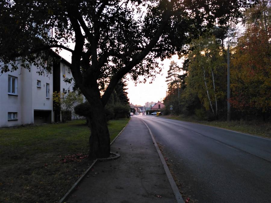 jabloň napůl v cestě