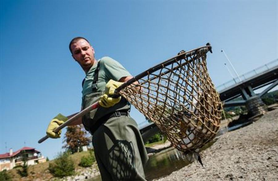 Rybáři čistí otrávenou Bečvu
