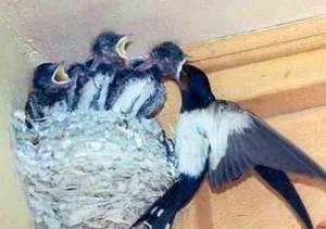 Kolik kukaček se zrodí z takových hnízda...?