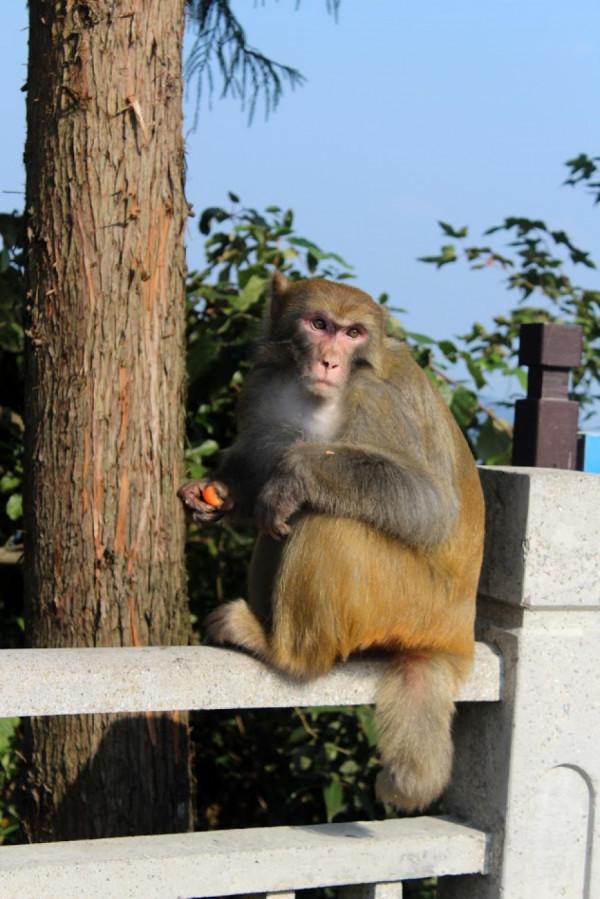 Rozloučení s opicemi u horní stanice lanovky