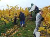 Podobenství o dělnících na vinici