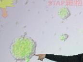Kmenové buňky z kyselé lázně slečny Haruko: Lstivá falzifikátorka či jen nevinný bílý kůň?