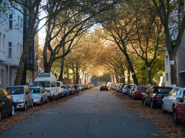uliční stromořadí Berlín, Německo