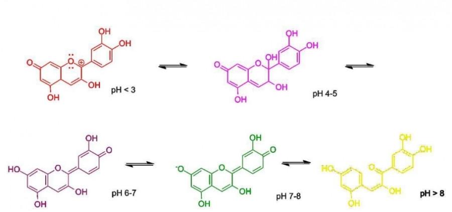 Obrázek: Barevné změny a změny struktury v závislosti na pH (kyselosti) prostředí. Zdroj: PigAndPepper (Own work) [Public domain], Wikimedia Commons, https://upload.wikimedia.org/wikipedia/commons/8/81/Rotkohl-Indikator-Reaktionen.png
