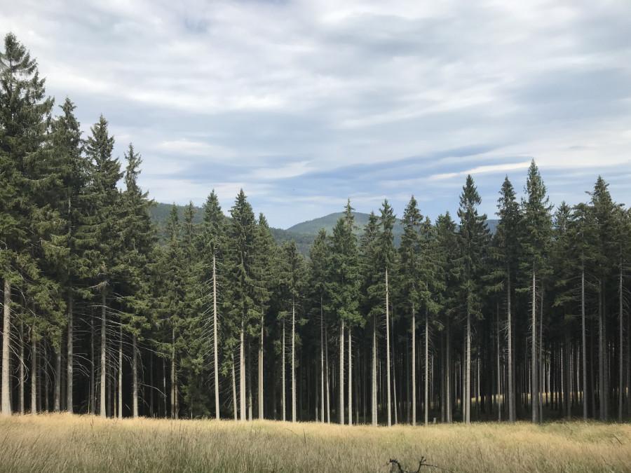 Góry Bialskie.