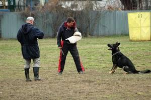 Pes by mil být poslušný, pokud nedostane poíkaz od majitele.