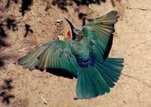 Modrý pták zezelenal...