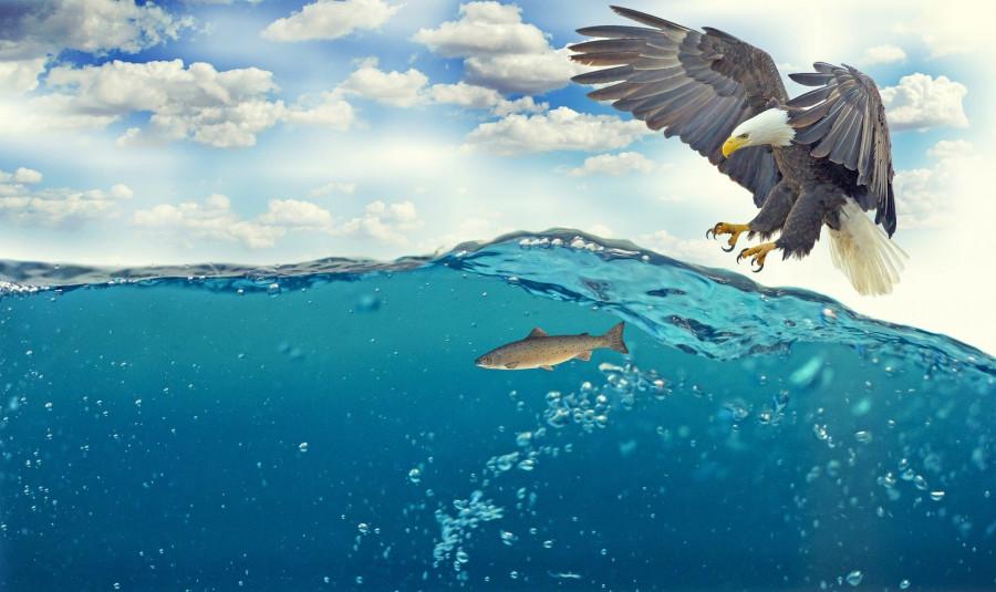 Při lovu ryby pod zvlněnou hladinou vody je nutné odhadnout skutečnou polohu a tvar ryby, které se liší od viděného tvaru a polohy