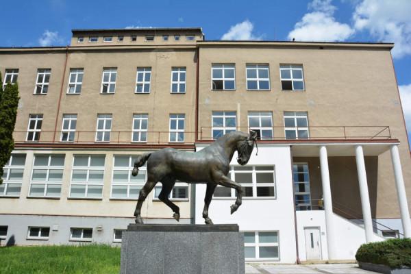 Kůň Ardo před budovou Veterinární a farmaceutické univerzity