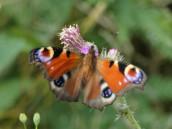 Dnešní jen tak i s mými motýly