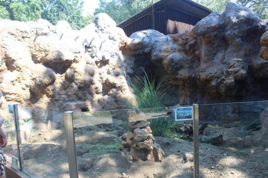 Zcela nové bydlení pro surikaty.