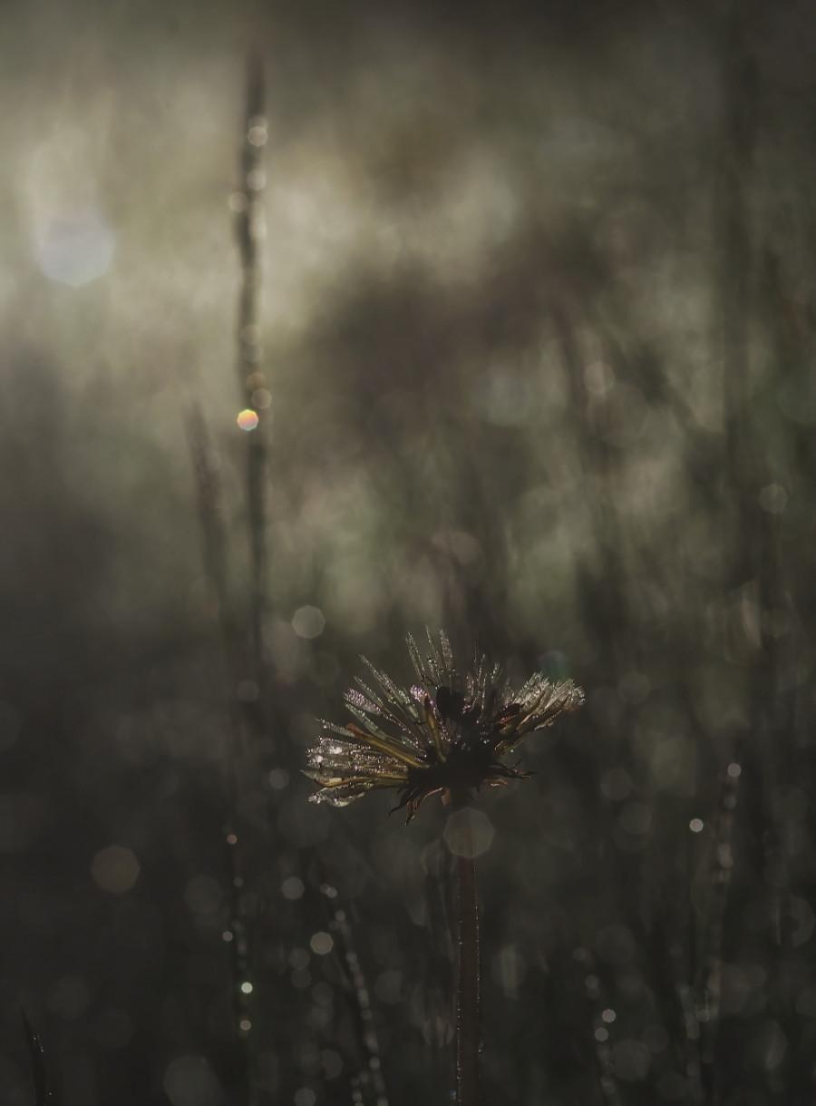 Rosa v trávě Beskydy